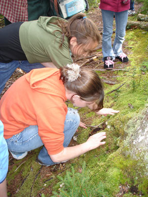 Students examine moss and lichen at Barred Island.